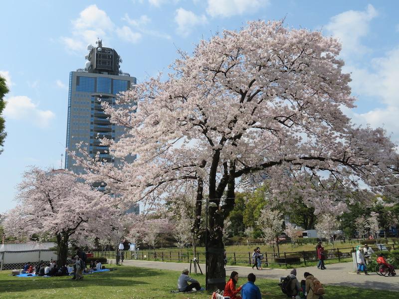 駿府公園お花見日和