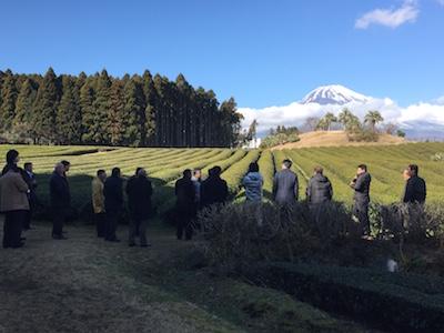 富士山を望む茶畑見学