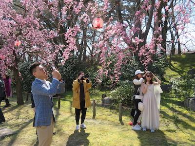 名古屋城桜鑑賞