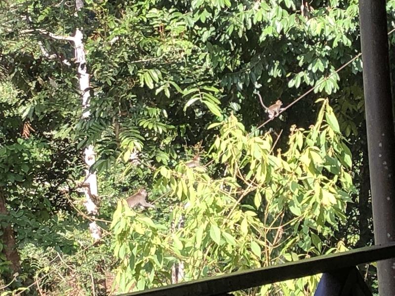 レストランからお猿さんが見えました
