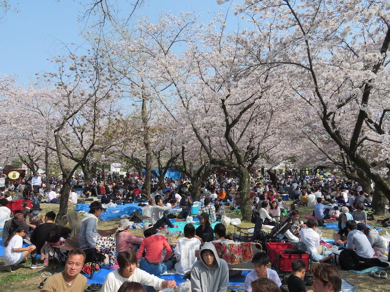 駿府城公園お花見
