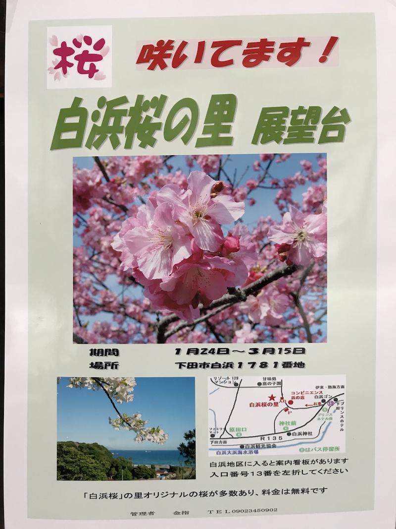 白浜桜の里案内