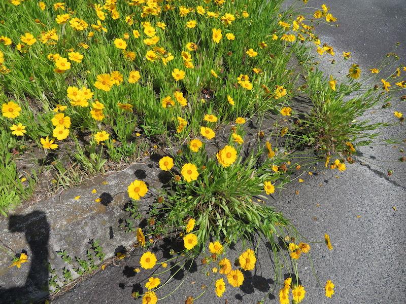 土壌を選ばない強い繁殖力